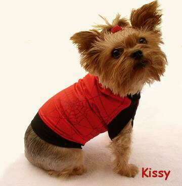 Halloween Fashions dog clothes