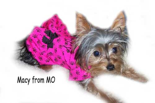 Neon Pink with black girl skulls dog clothes